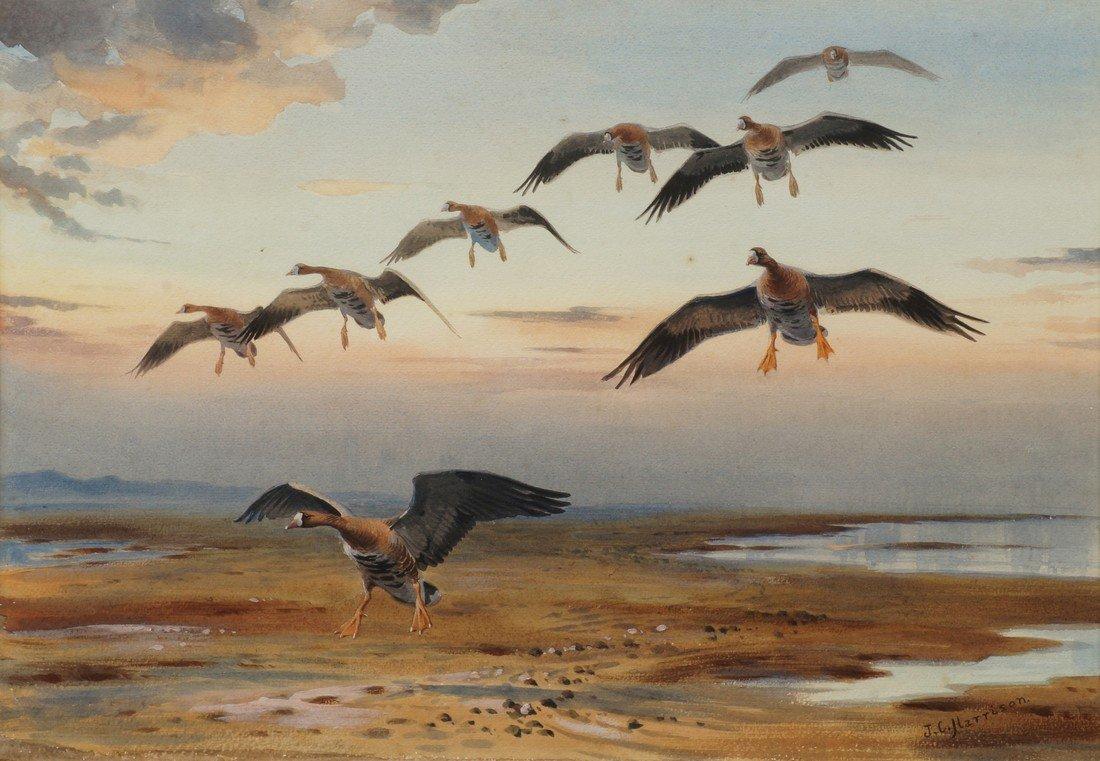 John Cyril Harrison, British 1898-1985- White-fronted