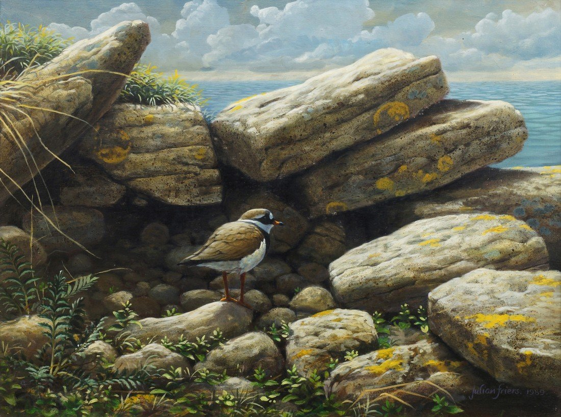 Julian Friers PRUA, Irish b.1956- ''Ringed Plover,