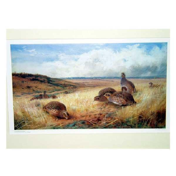 812: Art - A limited edition Archibald Thorburn print o