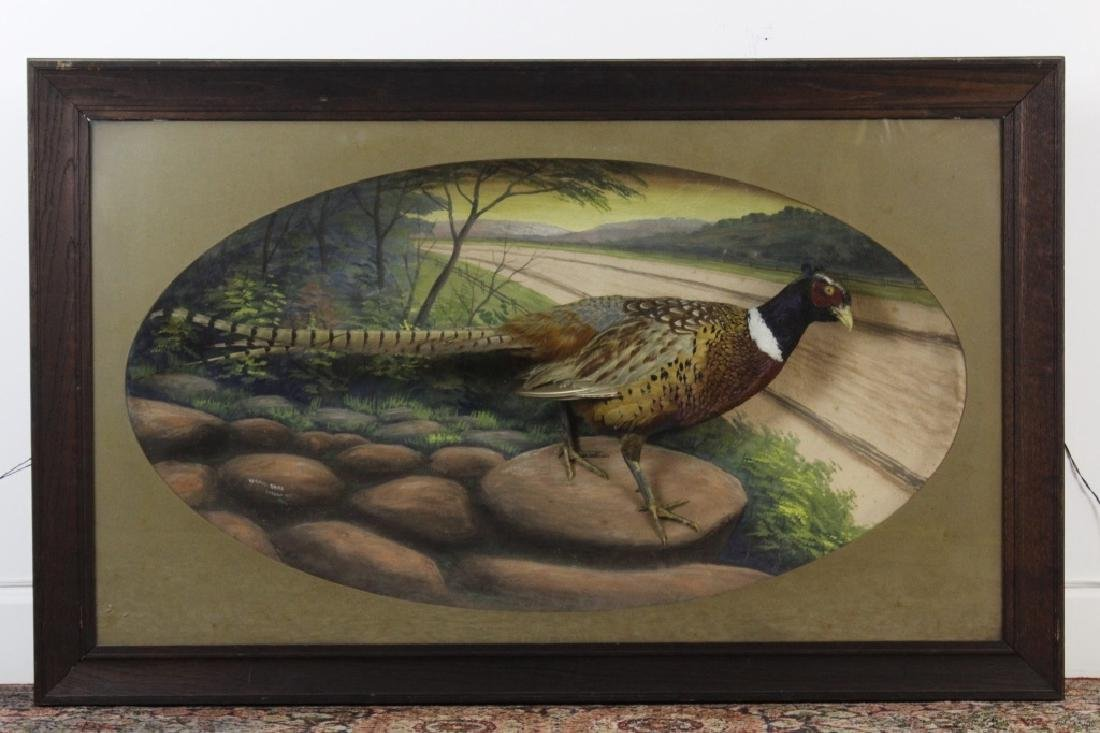 Early Taxidermy Mounted Male Pheasant in Diorama