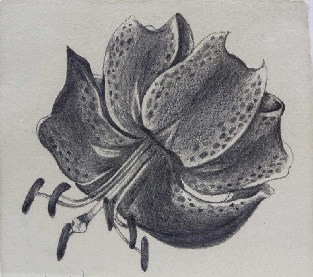 Pair LOWELL NESBITT Rose Floral Pencil Drawings - 2