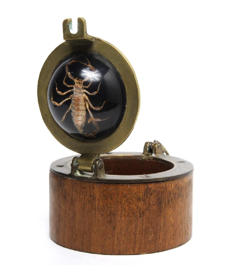 Nautical Wooden Tobacco Jar Box Preserved Scorpion