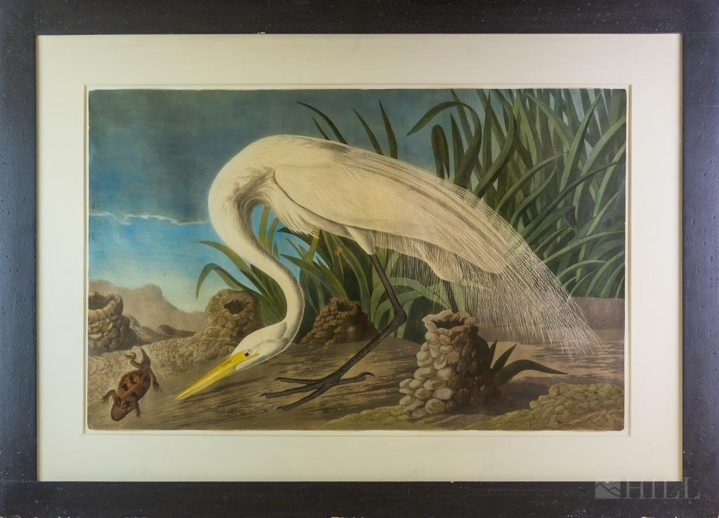 After John James Audubon White Heron Etching Print