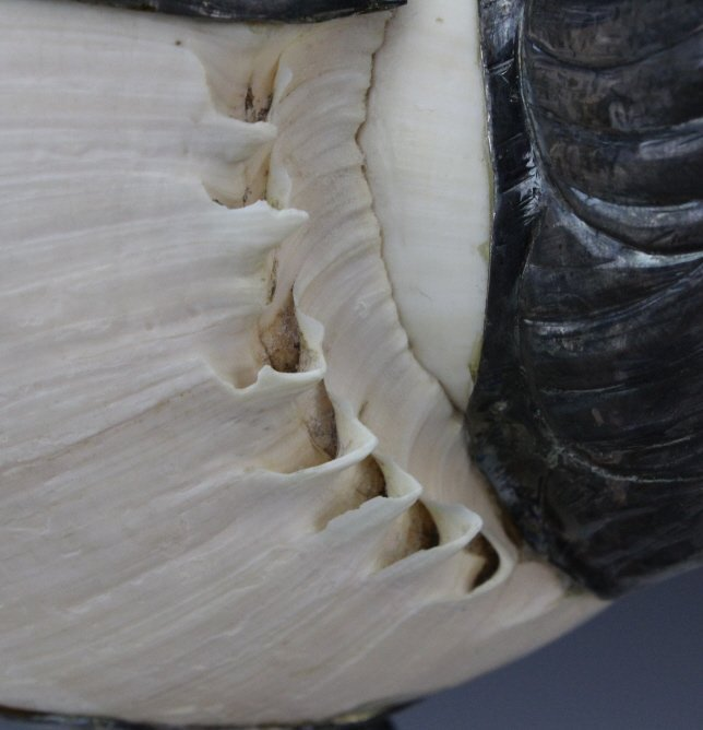 Binazzo Foresto Italian Bird w Shell Modern Statue - 9