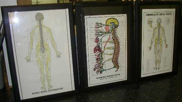 "31: SIX VARIOUS FRAMED BODY CHARTS: 39"" H. 27"" W."