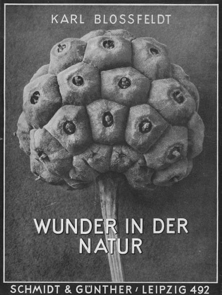 """15: Blossfeldt, Karl 1865 Schielo - 1932 Berlin  """"Wunde"""