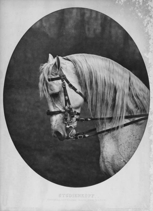 326: Ziesler, M. Worked as photographer between circa 1