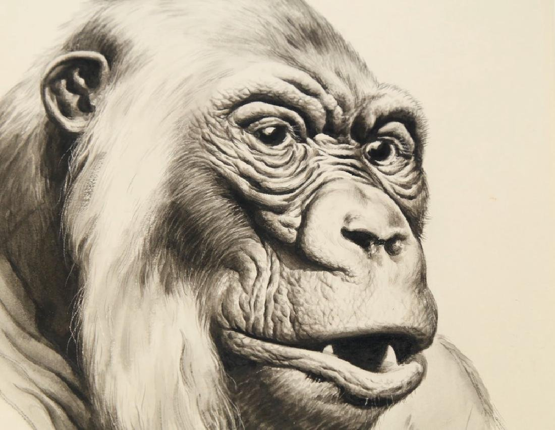 Kiska (American 20thc.)  Gorilla - 3