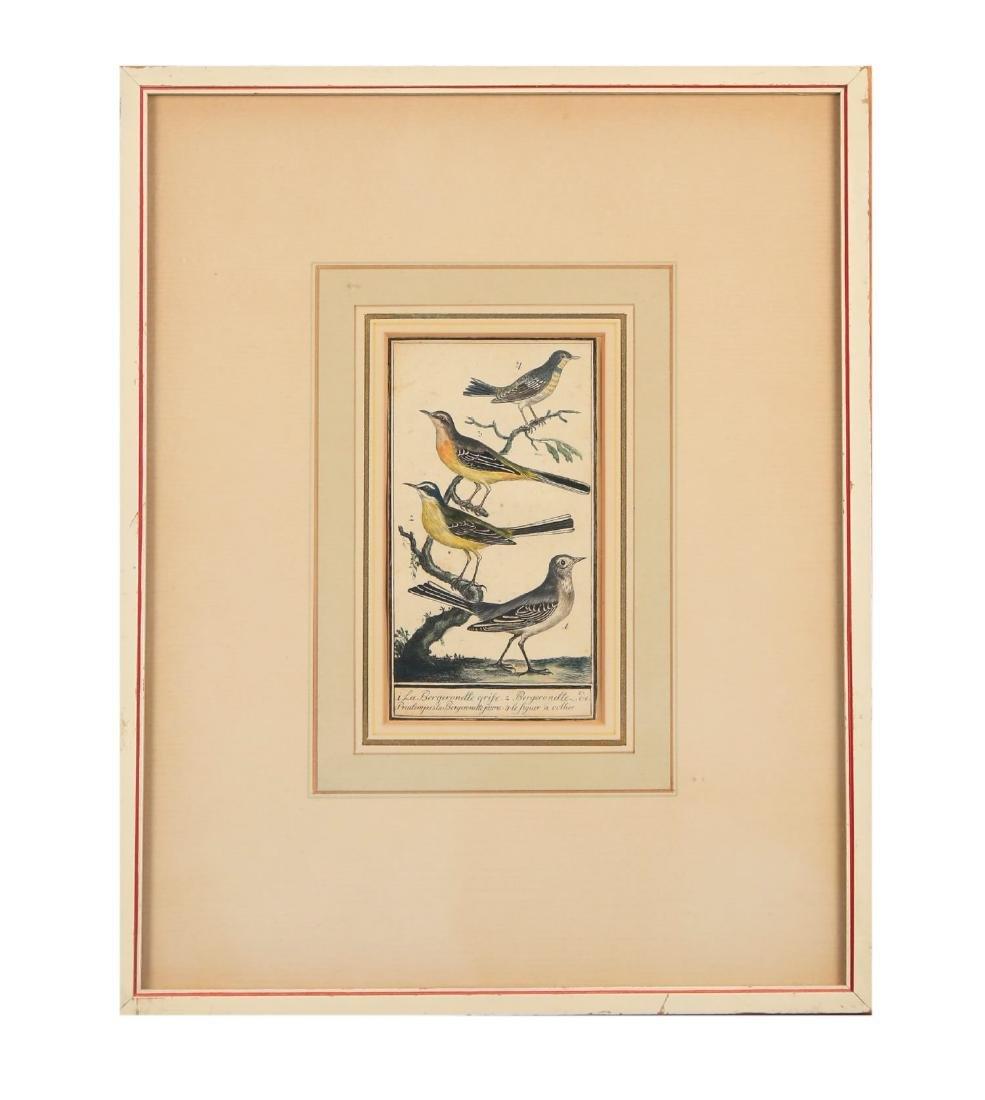 Two 18thc. Ornithological Prints - 2