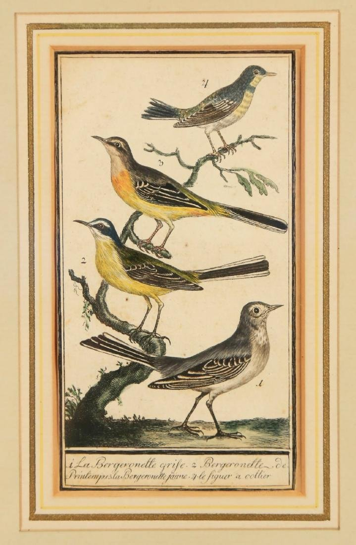 Two 18thc. Ornithological Prints - 3