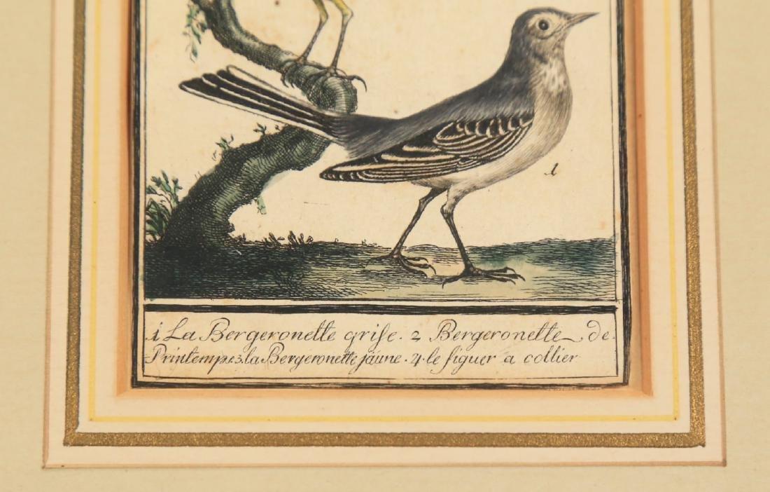 Two 18thc. Ornithological Prints - 4