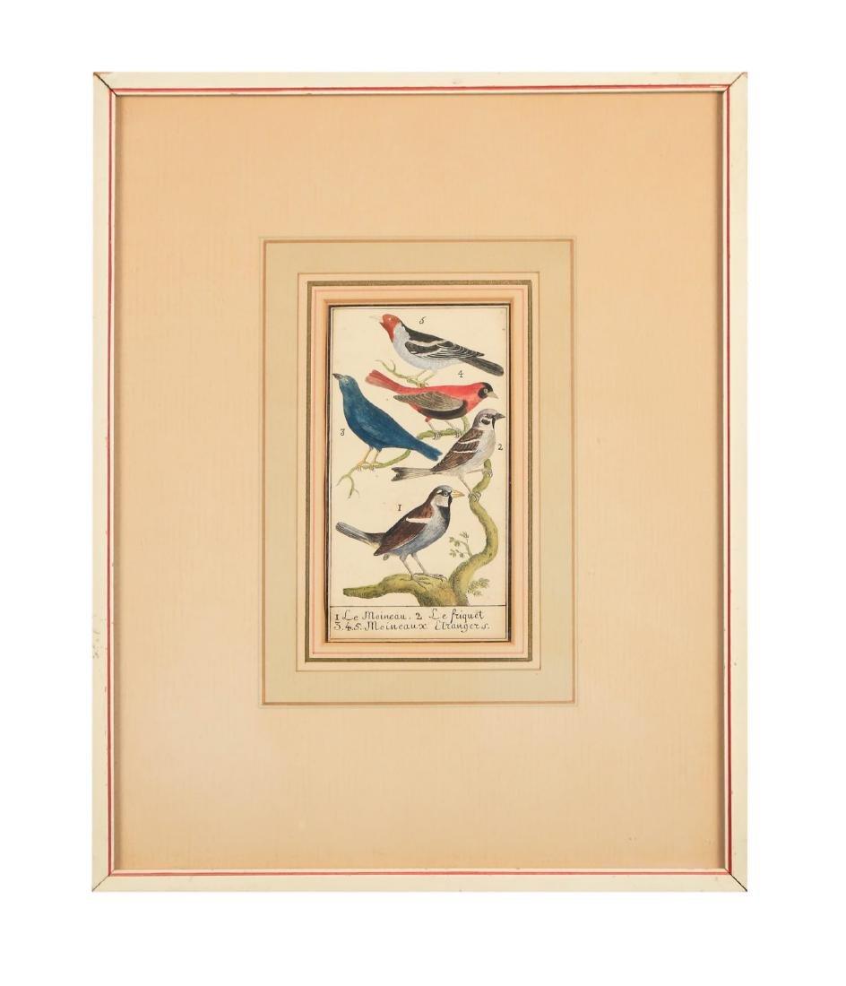 Two 18thc. Ornithological Prints - 6