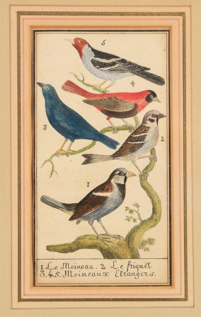 Two 18thc. Ornithological Prints - 7