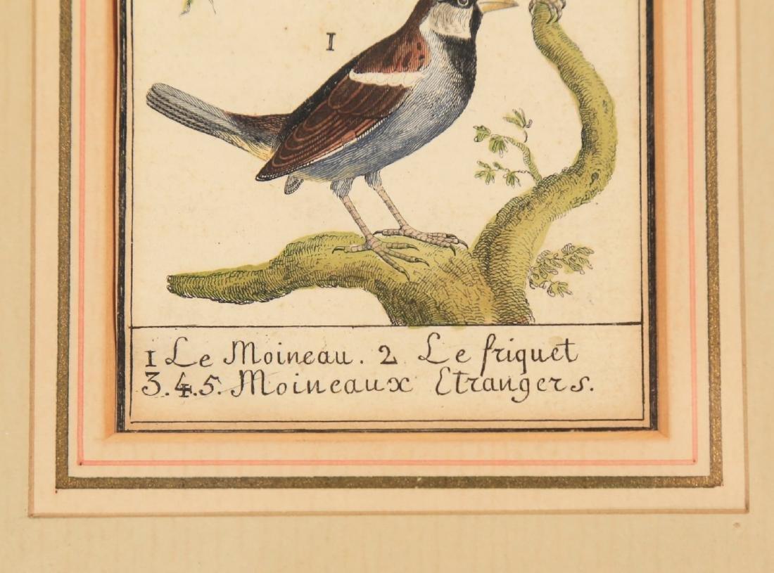Two 18thc. Ornithological Prints - 8
