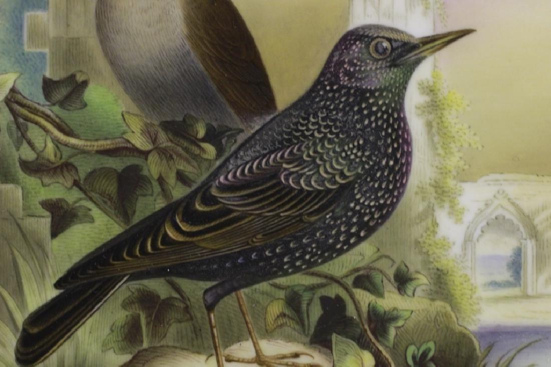 19thc English Porcelain Plaque of Birds Circa 1842 - 5