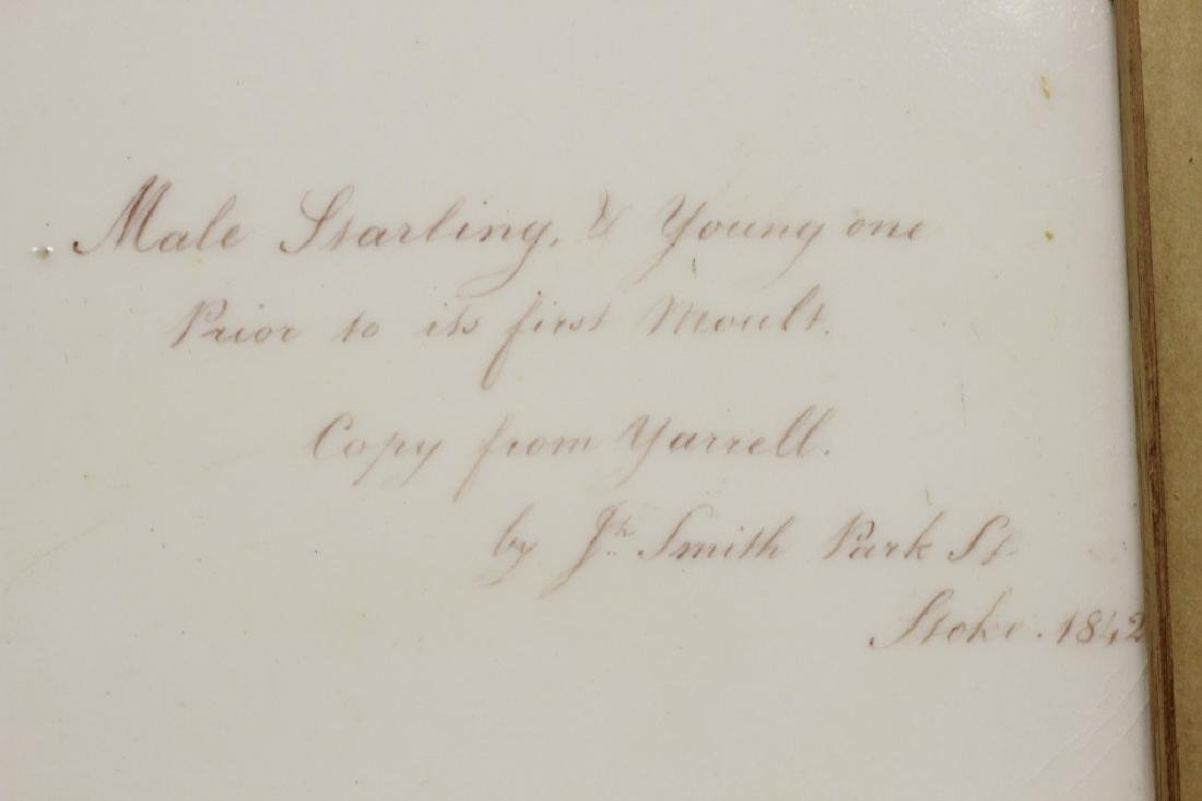 19thc English Porcelain Plaque of Birds Circa 1842 - 7