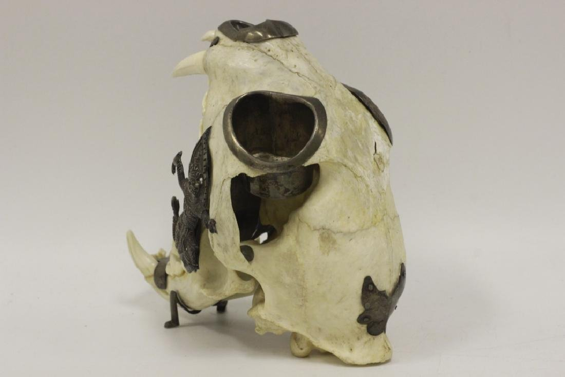 Thailand Extremely Rare Leopard Skull w/ Silver - 2