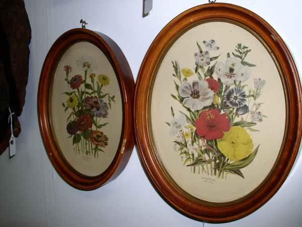 4: 2 botanical floral prints in frames 10 in tall