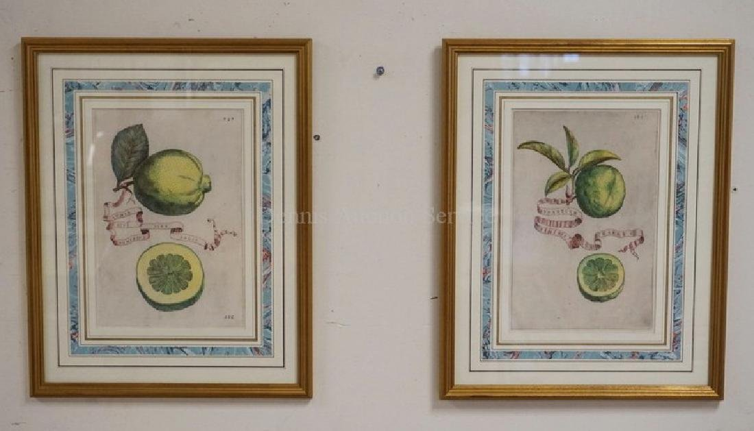 PAIR OF HAND COLORED ENGRAVINGS OF FRUIT.