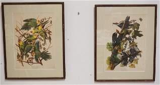 LOT OF 2 AUDUBON BIRD PRINTS. *CAROLINA PARROT* AND