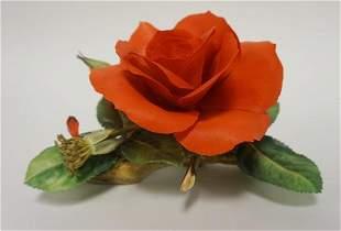 CONNOISSEUR OF MALVERN *BING CROSBY ROSE*