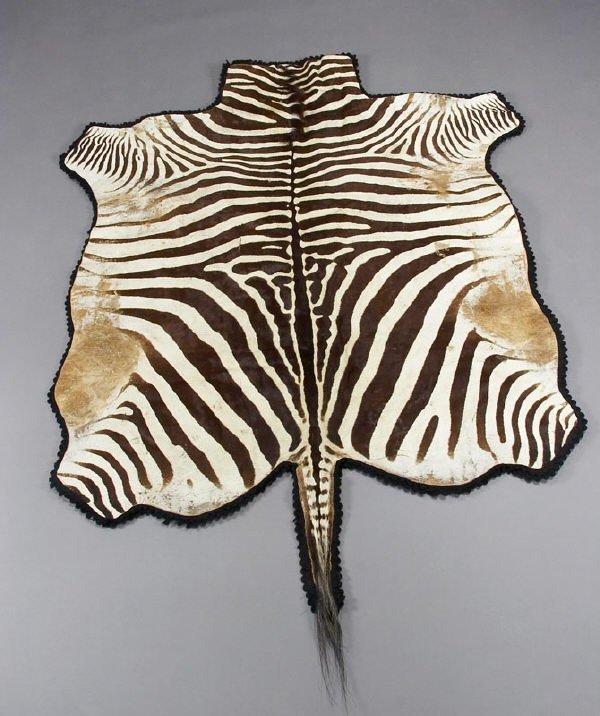 22: Zebra hide taxidermy rug prepared by Knopp