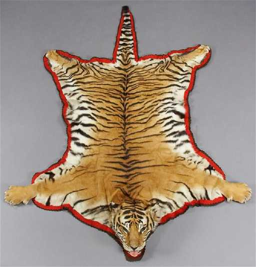 171: Bengal Tiger Full Head Taxidermy Rug