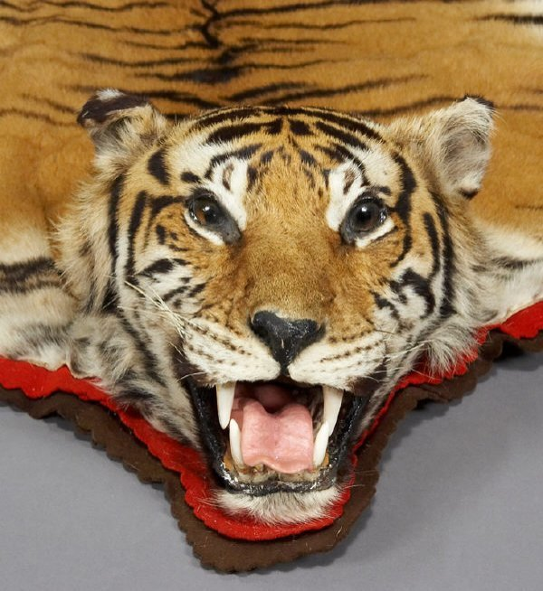171: Bengal Tiger Full Head Taxidermy Rug : Lot 171