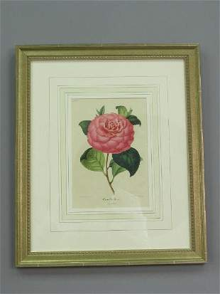 8 framed lithographs of camelias