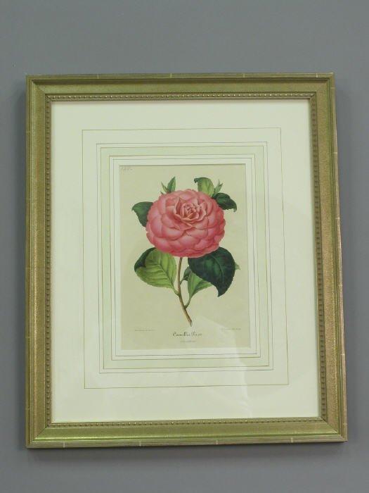517: 8 framed lithographs of camelias