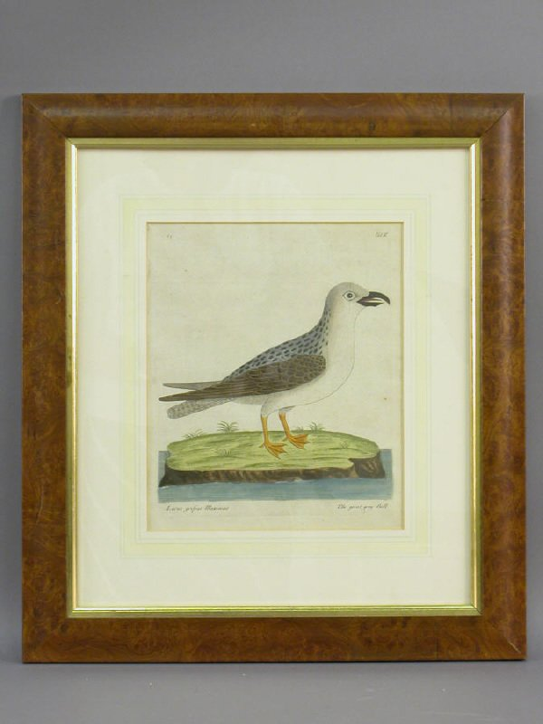 19: Antique hand colored copper engraving of a great