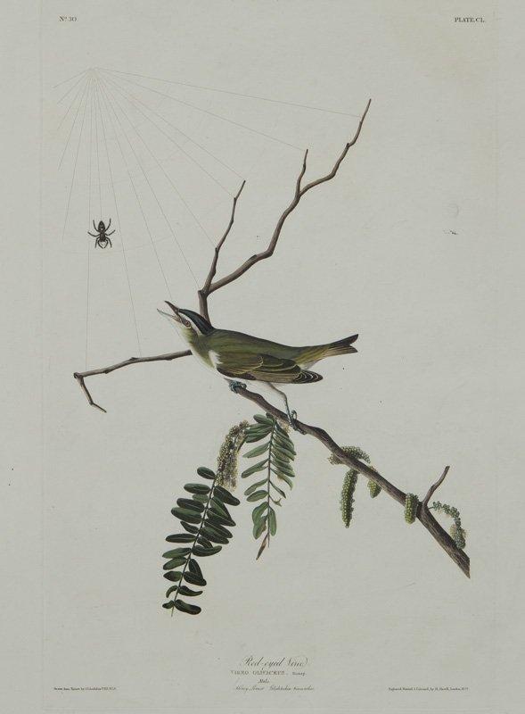 "After John James Audubon ""Red-eyed Vireo"""