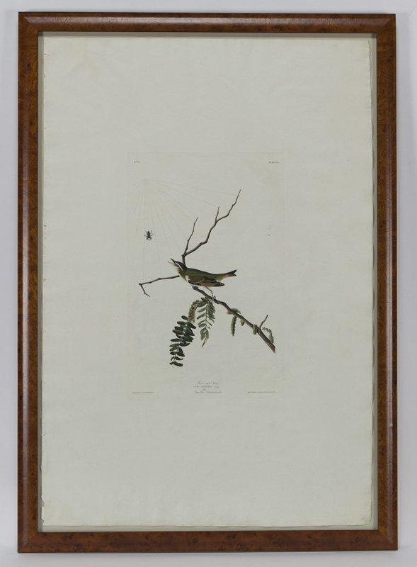 "After John James Audubon ""Red-eyed Vireo"" - 4"