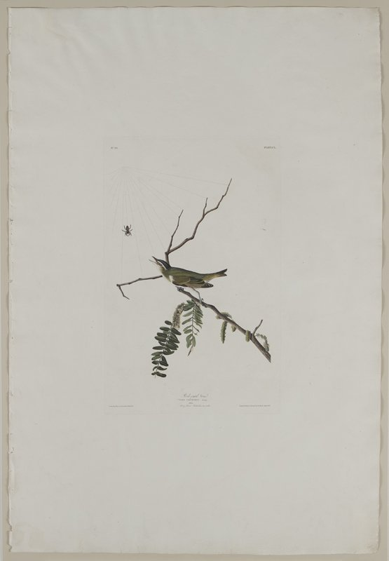 "After John James Audubon ""Red-eyed Vireo"" - 6"