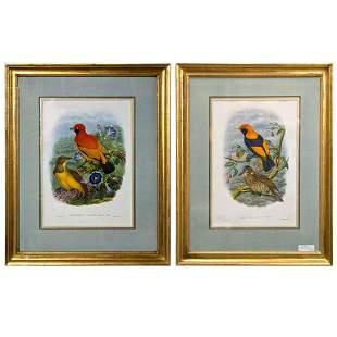 Pair of Framed Bird Lithographs