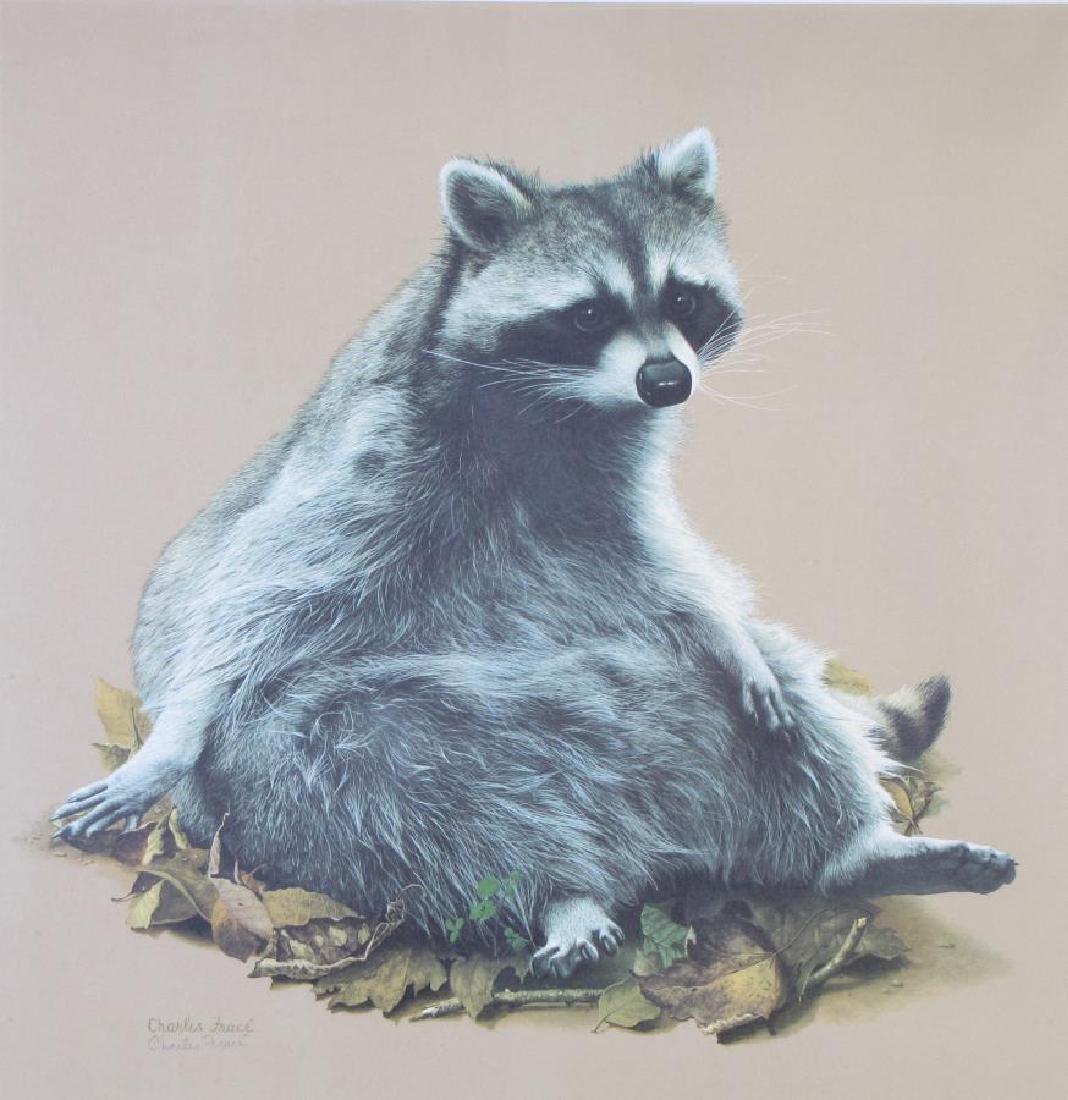 Charles Frace' Raccoon Print