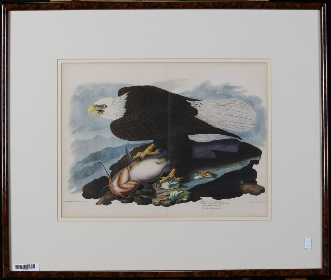 After Audubon, Havell Lithograph, Eagle