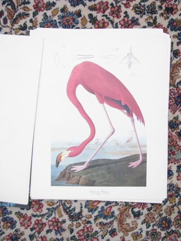"""The Audubon Folio"", Group of Bird Prints, Abrams - 2"