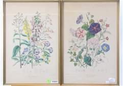 Pair of Antique Colored Botanical Prints
