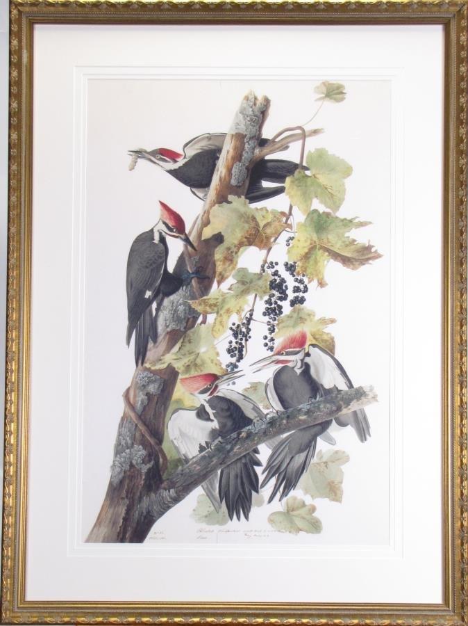 Oppenheimer Audubon Pileated Woodpecker