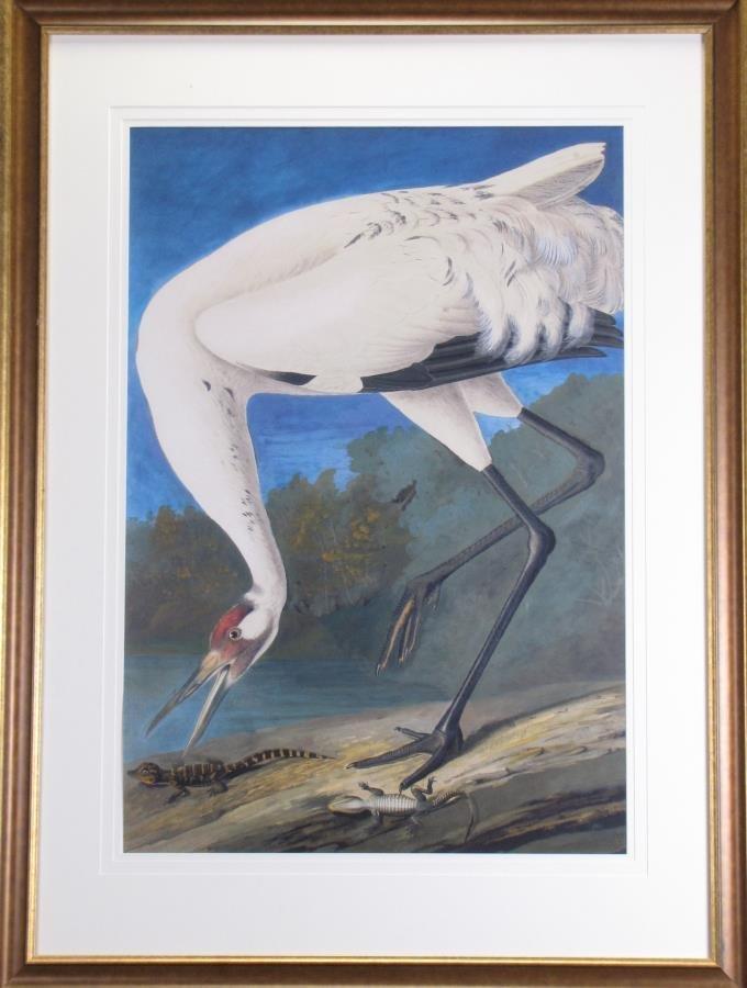 Oppenheimer Audubon Whooping Crane