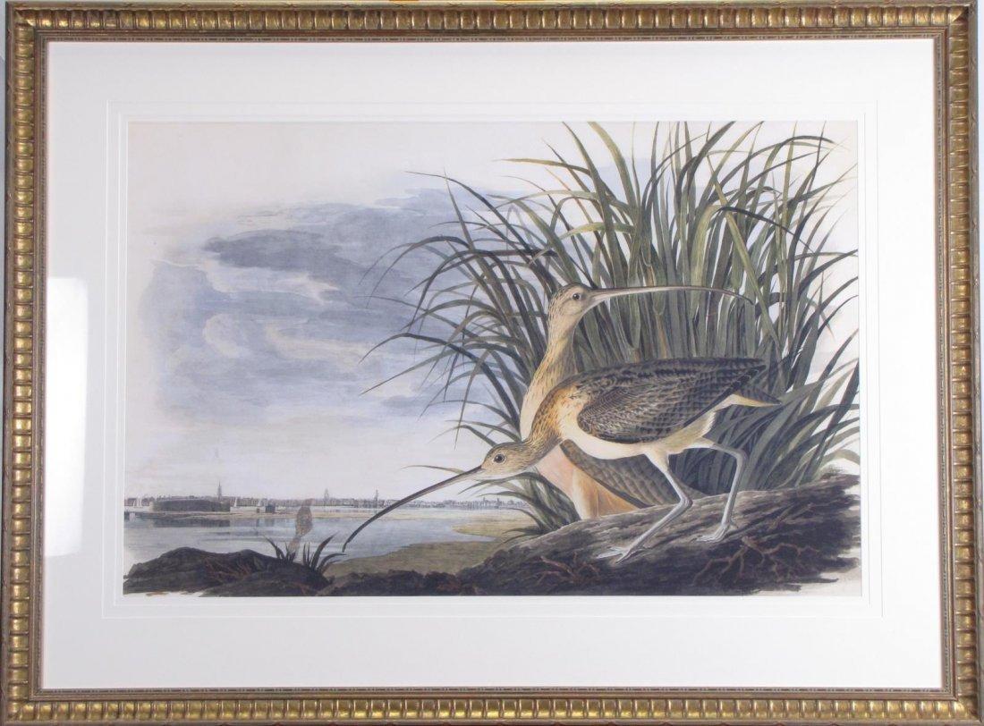 Oppenheimer Audubon Long-Billed Curlew