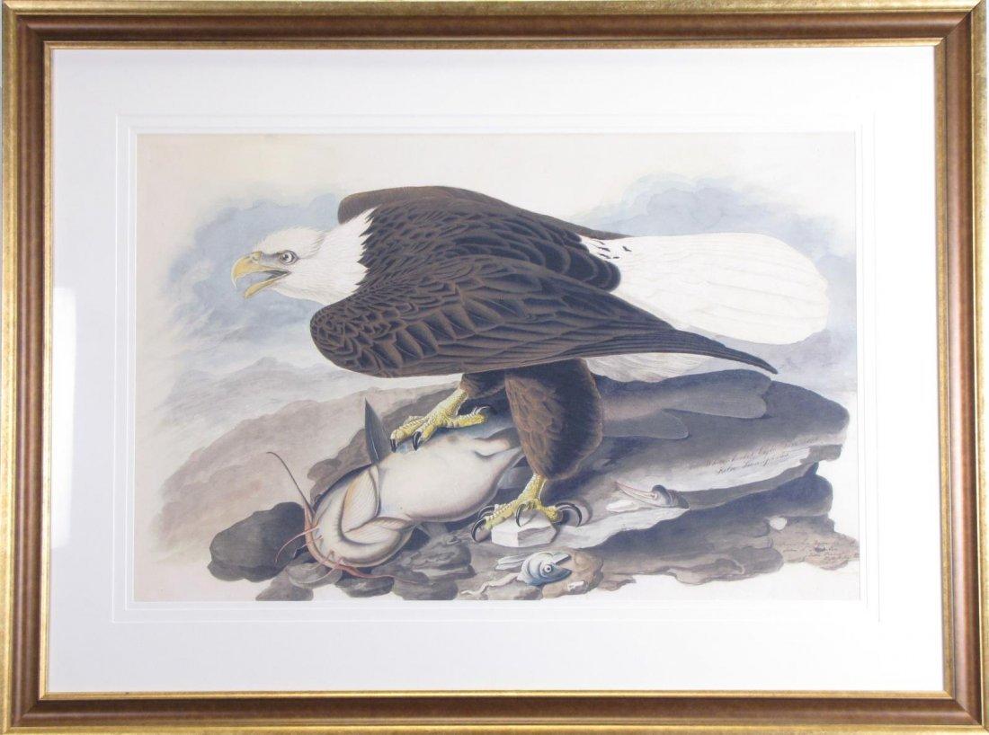 Oppenheimer Audubon White-Headed Eagle