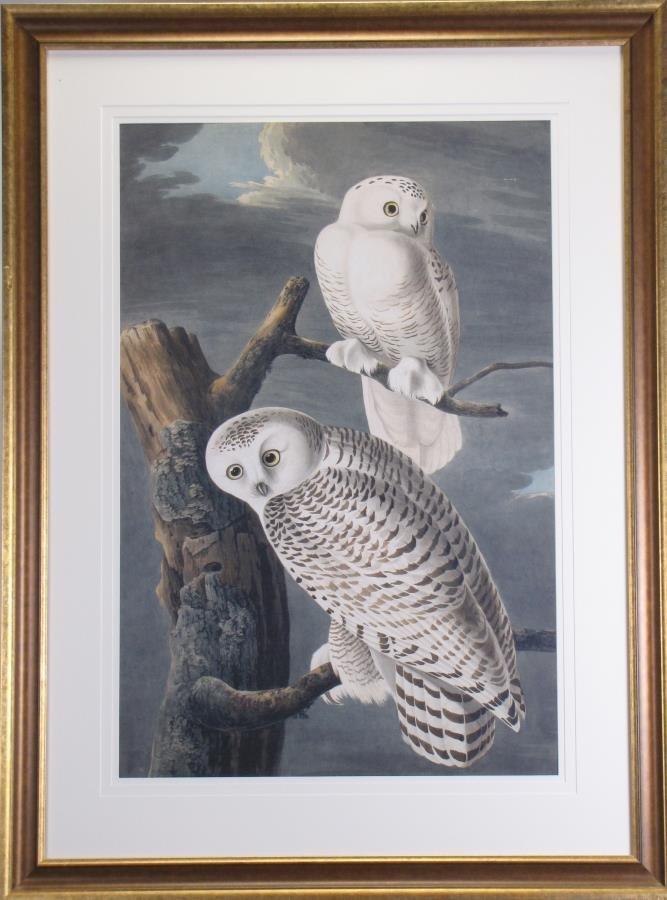 Oppenheimer Audubon Snowy Owl