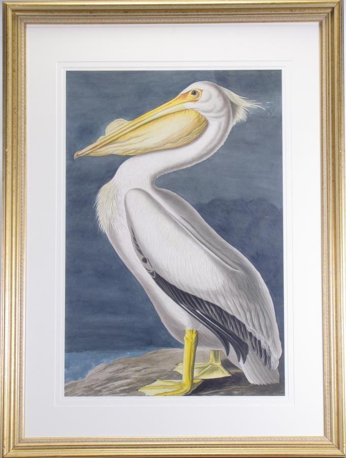 Oppenheimer Audubon American White Pelican