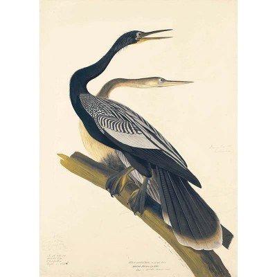Oppenheimer Audubon Black-Bellied Darter