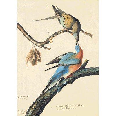 Oppenheimer Audubon Passenger Pigeon
