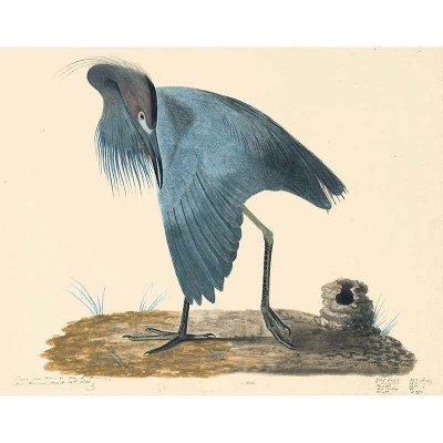 Oppenheimer Audubon Blue Heron