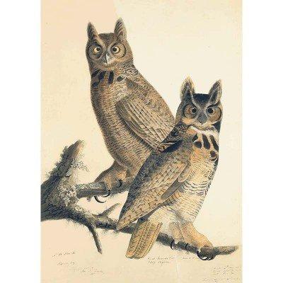 Oppenheimer Audubon Great Horned Owl