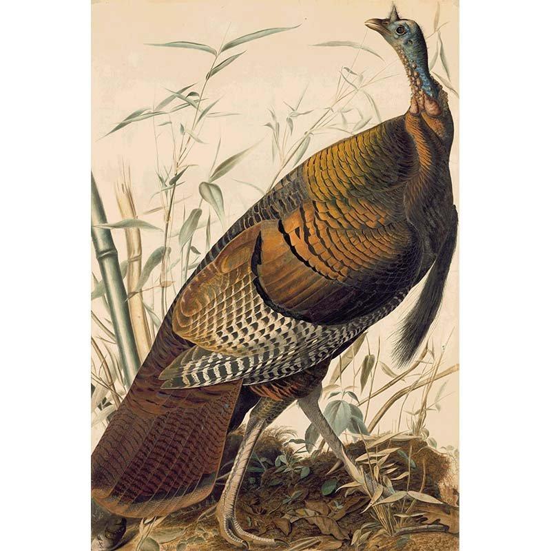 Oppenheimer Audubon Wild Turkey, Male